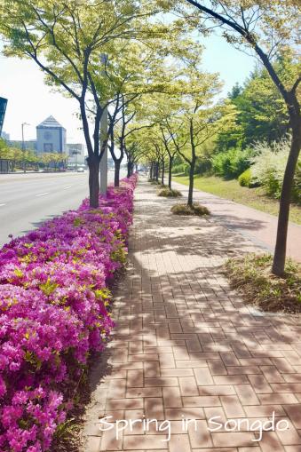 Spring in Songdo
