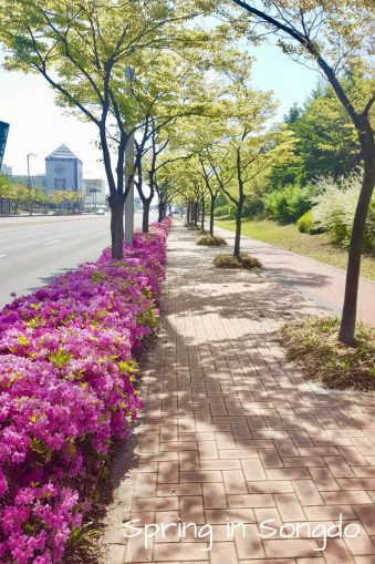 Spring in Songdo